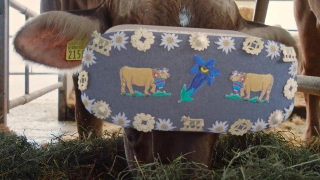 Bertujuan memperbaiki kondisi sapi agar menghasilkan susu yang melimpah. - Sapi Di Rusia Ini Pakai Kacamata VR Untuk Menurunkan Tingkat Stres